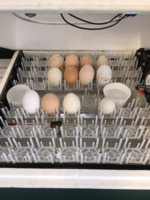 Eggs waiting to hatch